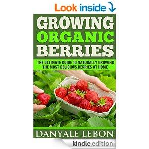growing-organic-berries